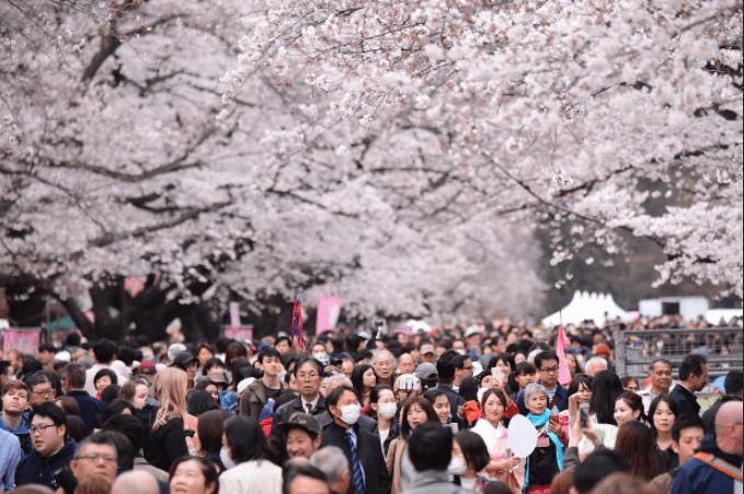 政府のイベント自粛要請の一方で、東京・上野公園では大勢の花見客が桜を楽しんだ