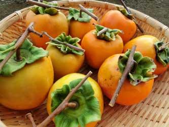 渋柿が新コロナに効果有
