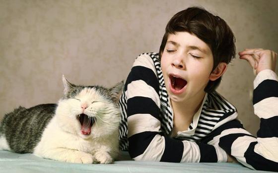 猫は飼い主のマネ